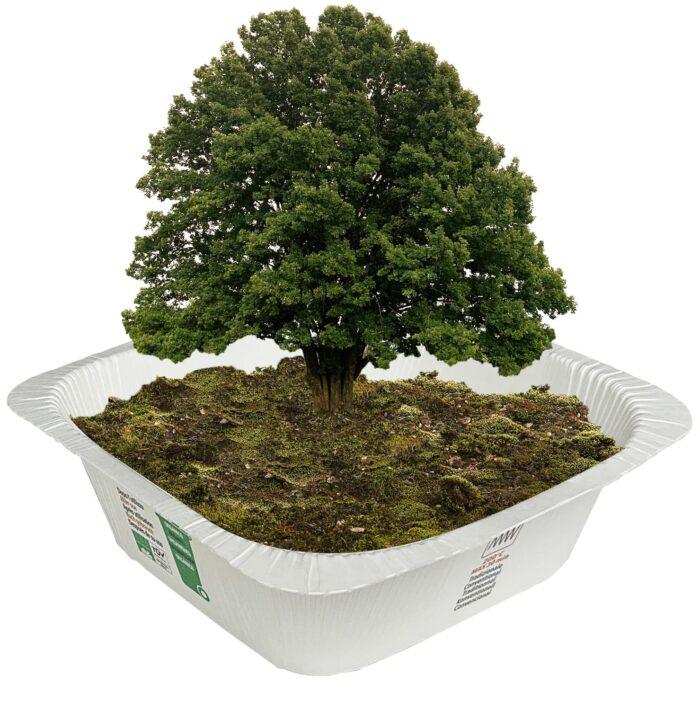vaschetta-cartoncino-compostabile-compac
